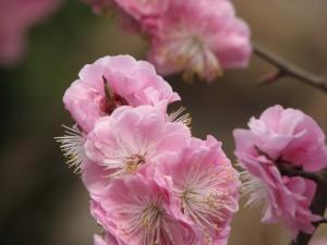 Spring-Blossom-beijing-2008-Simonblowqigong.com