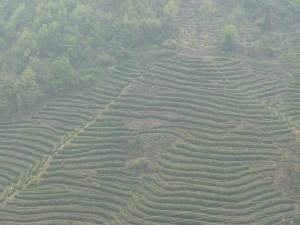 Wudangshan-Qigong-study-tour-2008-f-simonblowqigong.com