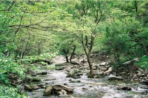 Wuganshan-Qigong-study-tour-2005-simonblowqigong.com